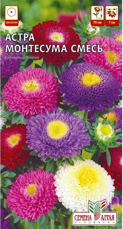 Семена Алтая Астра. Монтесума. Смесь4630002510199Цветистая смесь раннецветущей однолетней астры. Растение имеет колонновидную форму, достигает в высоту 70 см. Соцветия в числе 20—30, диаметром 7 см, плоскоокруглые, образованы плотно расположенными трубчатыми цветками в окружении коротких язычковых. Окраска яркая и разнообразная, в центре корзинки — кремово-желтая. Цветение с июля по август. Устойчива к неблагоприятным условиям и фузариозу, для традиционного использования. Холодостойкое, светолюбивое растение, выносит полутень. Хорошо растет на обычной садовой почве, но не переносит застоя воды и засухи. Вместо свежего органического удобрения в почву следует вносить компост. Легко поддается пересадке в любой фазе развития. Семена на рассаду высевают в марте-апреле, можно сеять в грунт и под зиму.Уважаемые клиенты! Обращаем ваше внимание на то, что упаковка может иметь несколько видов дизайна. Поставка осуществляется в зависимости от наличия на складе.