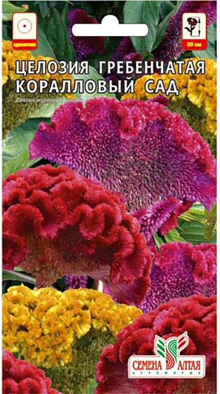 Семена Алтая Целозия гребенчатая. Коралловый сад4630002519000Невысокое (25-30 см) густооблиственное растение, во время цветения создающеенастоящий коралловый сад из алых, бордовых, желтых бархатистых гребенчатыхсоцветий. Удивительный внешний вид цветов доставит истинное наслаждение любителям экзотических композиций, не требуя никакого специального ухода. Ихможно использовать и для составления зимних букетов. Обычно размещаются всаду в групповых посадках, используются при создании ярких акцентов,оформлении террас и балконов.Свето- и теплолюбивое растение, хорошорастет на рыхлой, легкой, питательной почве. Полив умеренный. Выращиваютчерез рассаду (с конца марта), в открытый грунт высажвиают в июне. Цветет сиюля до заморозков.Уважаемые клиенты! Обращаем ваше внимание на то, что упаковка может иметьнесколько видов дизайна. Поставка осуществляется в зависимости от наличия наскладе.