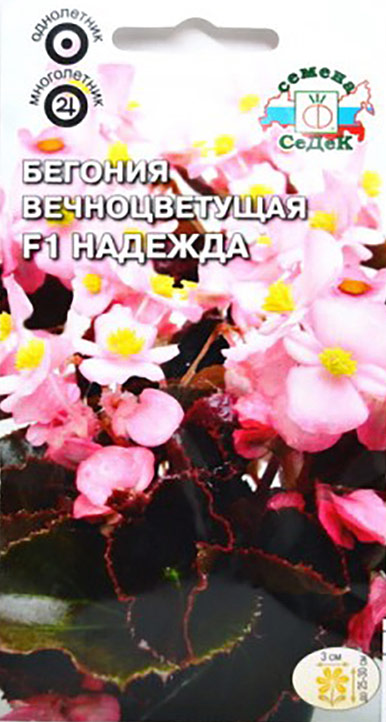 Семена Седек Бегония вечноцветущая. Надежда F14690368015608Многолетнее травянистое растение, в культуре открытого грунта выращивается как однолетнее. Растение кустовое компактное, высотой до 25-30 см. Листья округло-овальные, блестящие, бронзово-коричневые, мелкозубчатые по краю. Цветки простые и полумахровые, белые, 3 см в диаметре. Во время цветения убирать отцветшие цветки не требуется, так как растение способно к самоочищению. Цветет обильно и продолжительно до заморозков. Имеет высокую устойчивость к неблагоприятным погодным условиям. Хорошо развивается при солнечной и пасмурной погоде. Выращивая бегонию из семян, не заделывайте их глубоко, так как они очень мелкие. Всходы держите под стеклом, увлажняя теплой (30°С) водой. Используется для выращивания большими массивами на клумбах, в рабатках. Также как горшечное растение для озеленения балконов высаживается в кашпо, подвесные корзины, контейнеры. Товар сертифицирован.Уважаемые клиенты! Обращаем ваше внимание на то, что упаковка может иметь несколько видов дизайна. Поставка осуществляется в зависимости от наличия на складе.