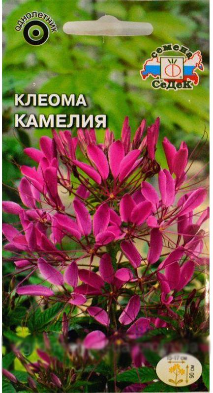 Семена Седек Клеома. Камелия фиолетовая4690368023443