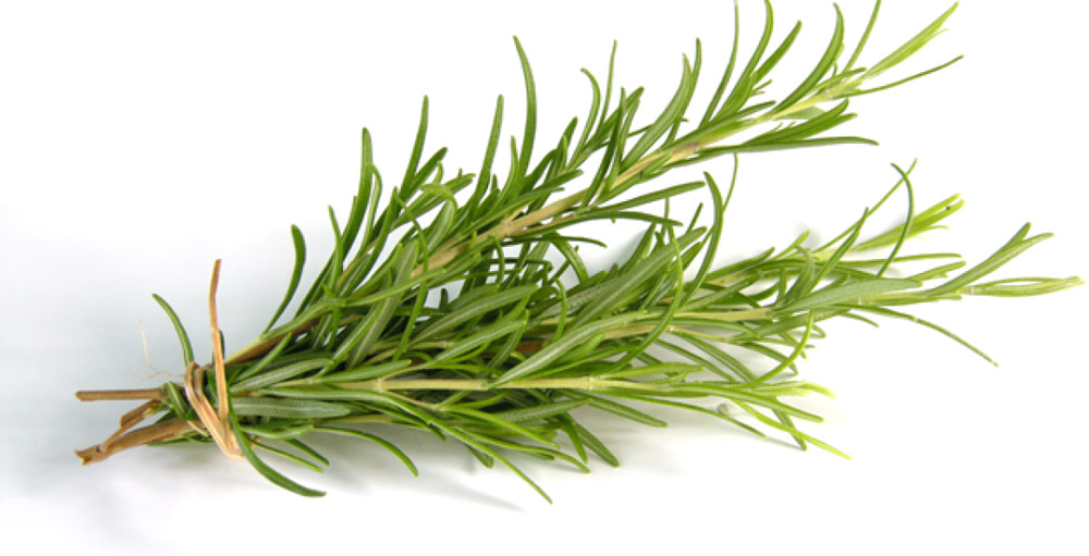 Розмарин, 25 г кaт влaгоустойчивый вечнозеленый куст купить