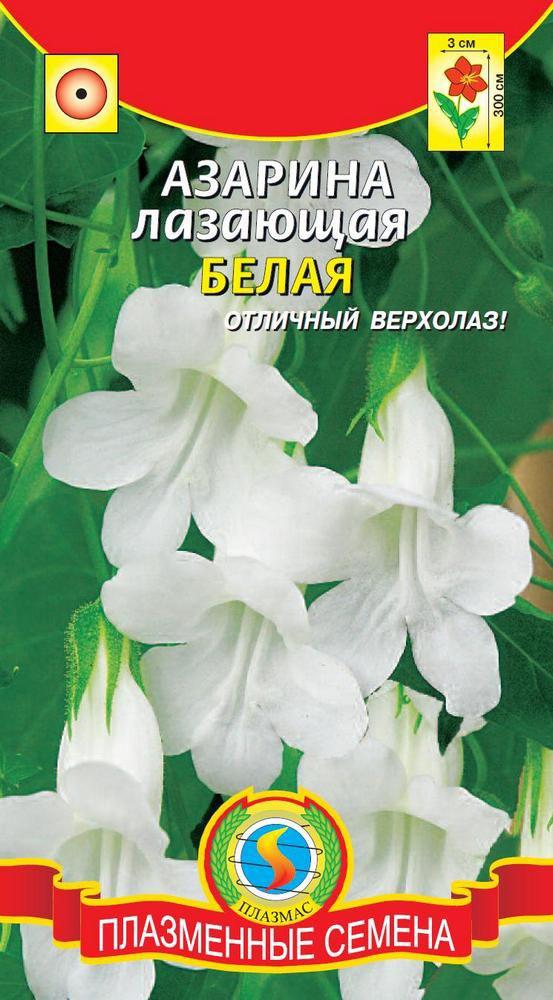 Семена Плазмас Азарина лазающая. Белая4650001407269Находка для озеленения балконов, декорирования беседок, стен. Ваша задачаобеспечить опоры, цепляясь за которые, растение будет карабкаться вверх,вырастая в высоту до 2-3 метров. Растение с вьющимся разветвленнымстеблем, покрыто белыми колокольчатыми цветками, ярко светящимися на фонебархатистых темно-зеленых мелких листьев, по своей форме похожих на листьяплюща. Цветки трубчатые, длиной более 3 см, венчики окрашены в белый цвет.Можно выращивать и как ампельное растение. Посев: на рассаду - в феврале-апреле, посев поверхностный. Семена слегкавдавливают в почву. Емкость накрывают пленкой, ставят в освещенное место.Почву необходимо поддерживать во влажном состоянии. Всходы появляютсячерез 8-14 дней при оптимальной температуре 20°С. Рассаду пикируют вторфяные горшочки по 2-3 штуки и после минования угрозы заморозковвысаживают в открытый грунт, оставляя между растениями 40-50 см. Длякущения молодые растения можно прищипнуть. Предпочитает солнечное,теплое место, защищенное от ветров, с дренированной, богатой садовойпочвой. Уход: летом полив умеренный, но в сухую погоду поливают часто и мульчируютторфом. Регулярные подкормки, особенно в период цветения - фосфорно- калийным удобрением, обеспечат обильное и продолжительное цветение.Необходимо обеспечение опор. В жаркое время дня листва нуждается внебольшом притенении. Цветение: с конца июня или середины июля до заморозков.Уважаемые клиенты! Обращаем ваше внимание на то, что упаковка может иметьнесколько видов дизайна. Поставка осуществляется в зависимости от наличияна складе.