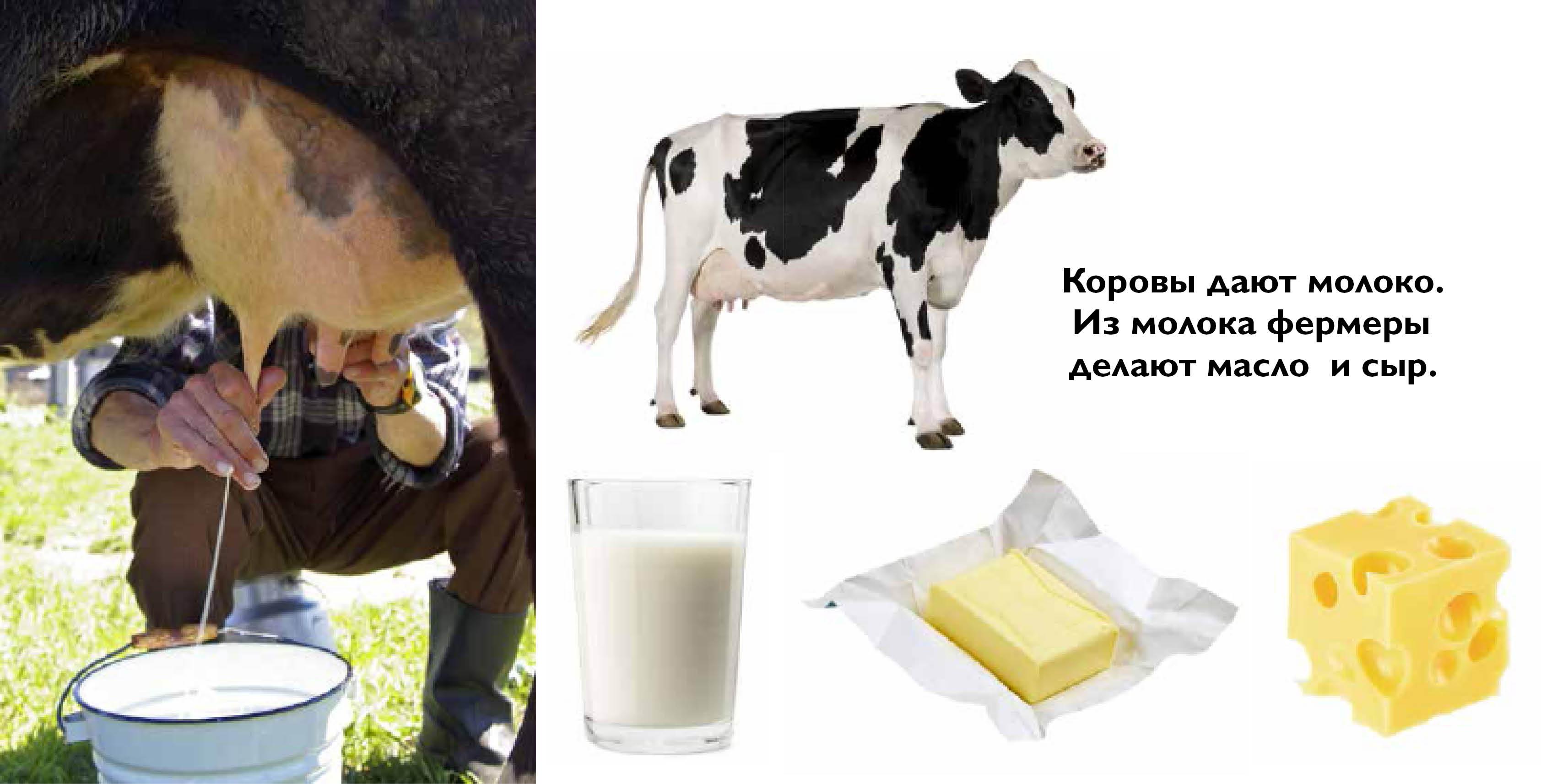 Животные дающие молоко картинки