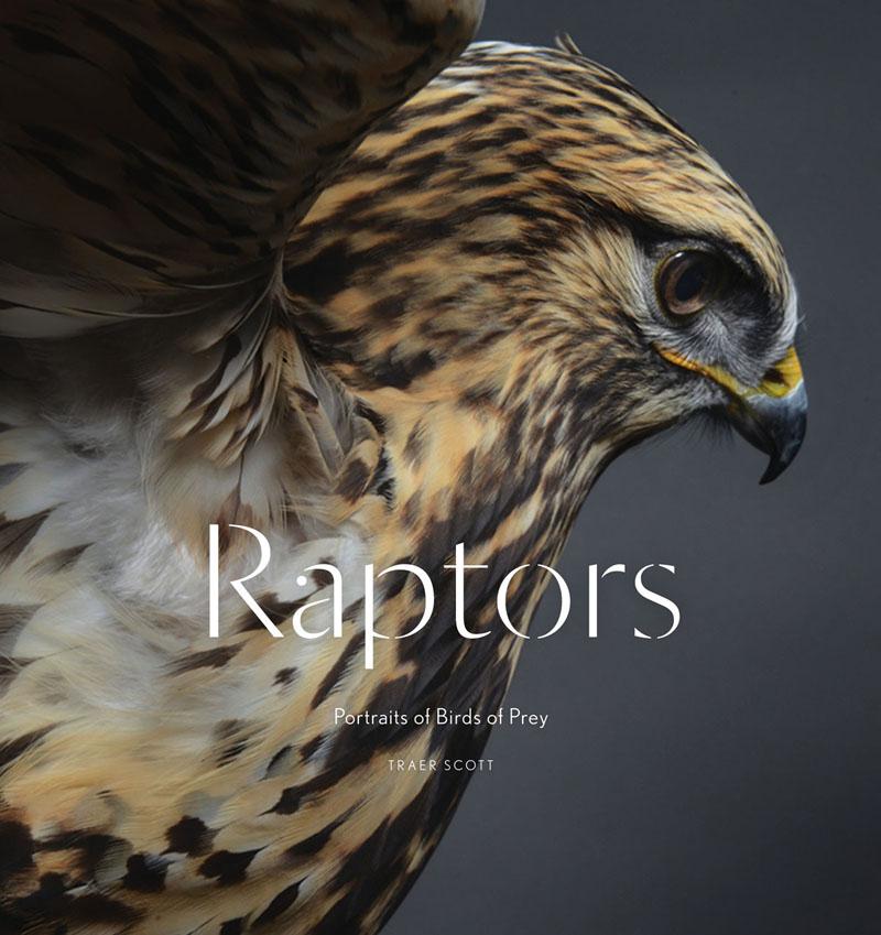 Raptors. Portraits of Birds of Prey birds of prey