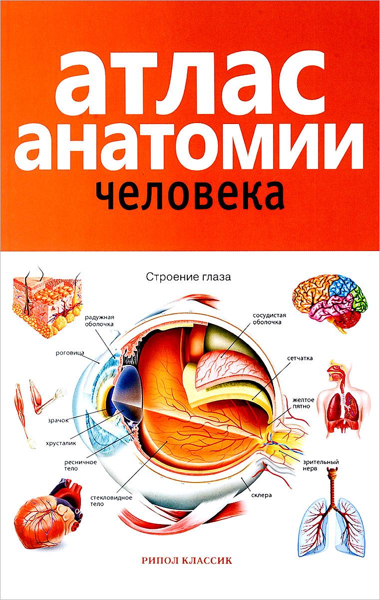 Атлас анатомии человека винсент перез большой атлас анатомии человека