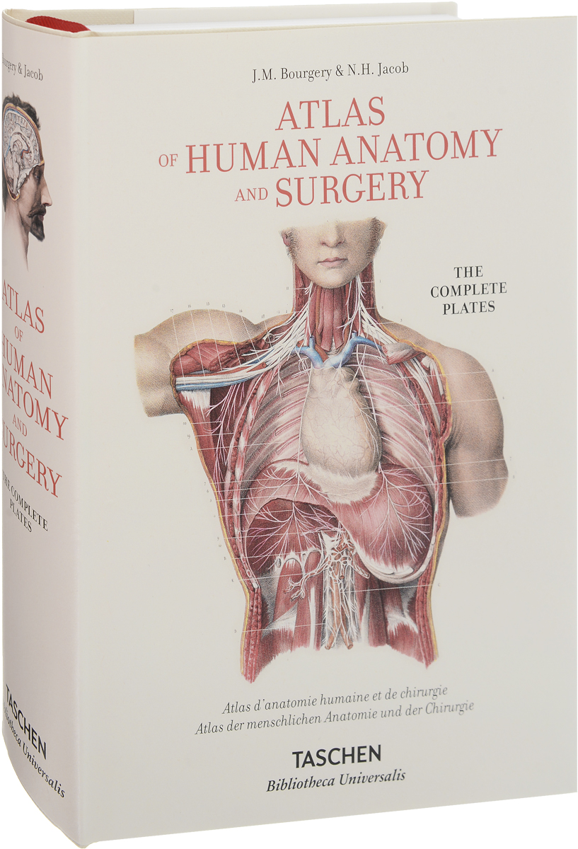 Atlas of Human Anatomy and Surgery human anatomical anatomy hand medical model nerve blood vessel divided