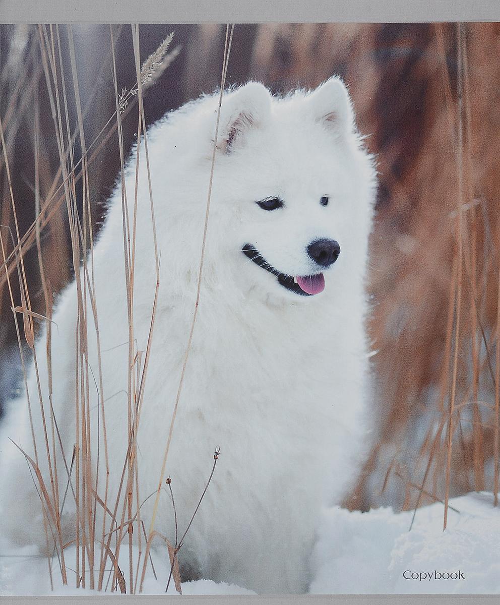 Канц-Эксмо Тетрадь Белоснежные собаки Собака на снегу 48 листов  клетку