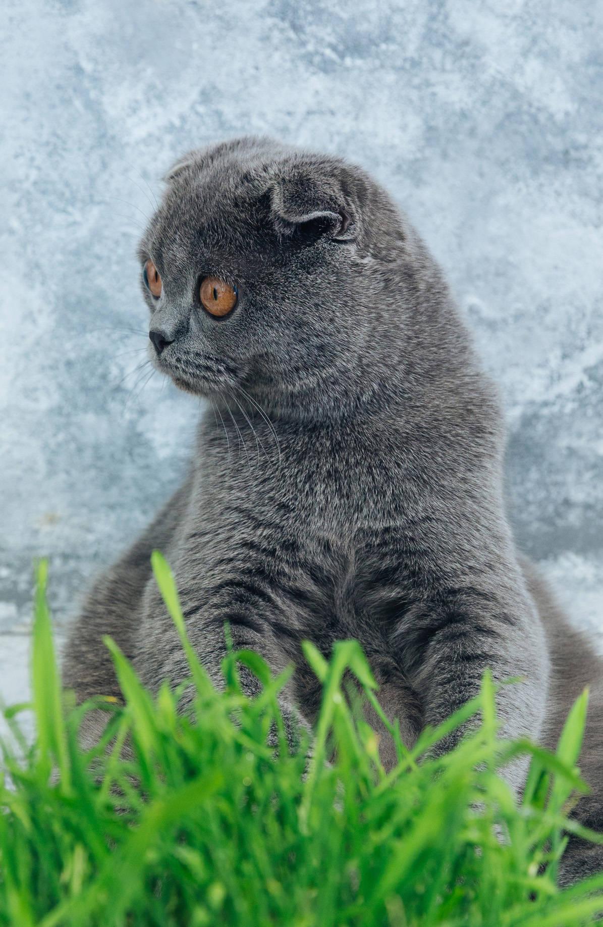 Shocked Cat (А5), Усольцева Оксана Мехмановна