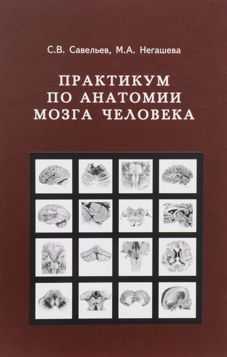 Практикум по анатомии мозга человека