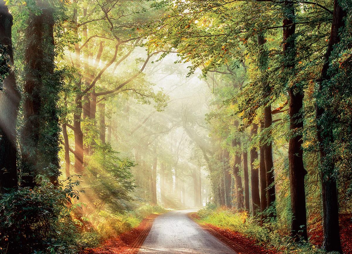 """Легкие порывы ветра раскачивают деревья, солнце пронизывает листву. Шум ветра в ветвях и  шелест травы создают приятный фон дляпрогулки. Чувствуется сила воздушной стихии. Запах  леса успокаивает и придает силы.  Фотообои """"PosterMarket"""" позволят создать  неповторимый облик помещения, в котором они размещены. Фотообои наносятся на стены одним  большим полотном. Они не впитывают жир, грязь, чернила, краски и пластилин.  Фотообои снова вошли в нашу жизнь, став модным направлением декорирования интерьера.  Выбрав правильную фактуру и сюжет изображения можно добиться невероятного эффекта  """"живого присутствия""""."""