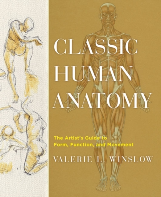 Classic Human Anatomy max djeen september anatomy of madness
