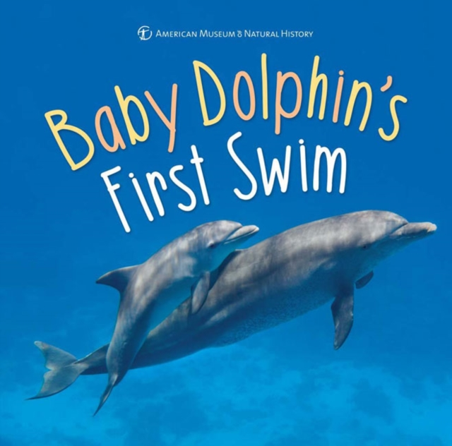 Baby Dolphins First Swim