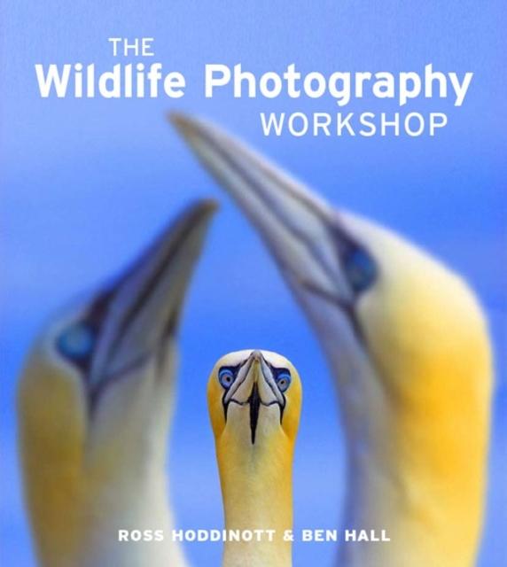 Wildlife Photography Workshop rspb wildlife in your garden