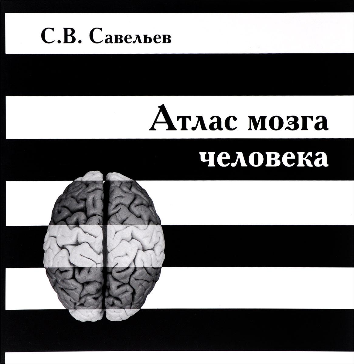 Атлас мозга человека