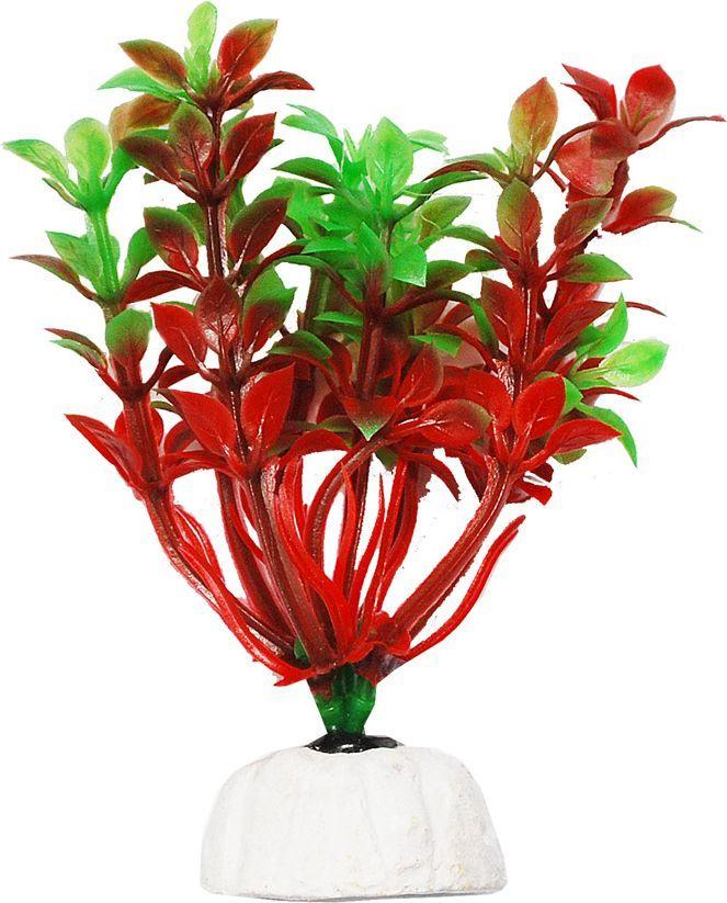 Растение для аквариума Уют