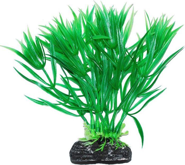 Растение для аквариума Уют Гетерантера зеленая, высота 11 см растение еда для рыб 5 букв