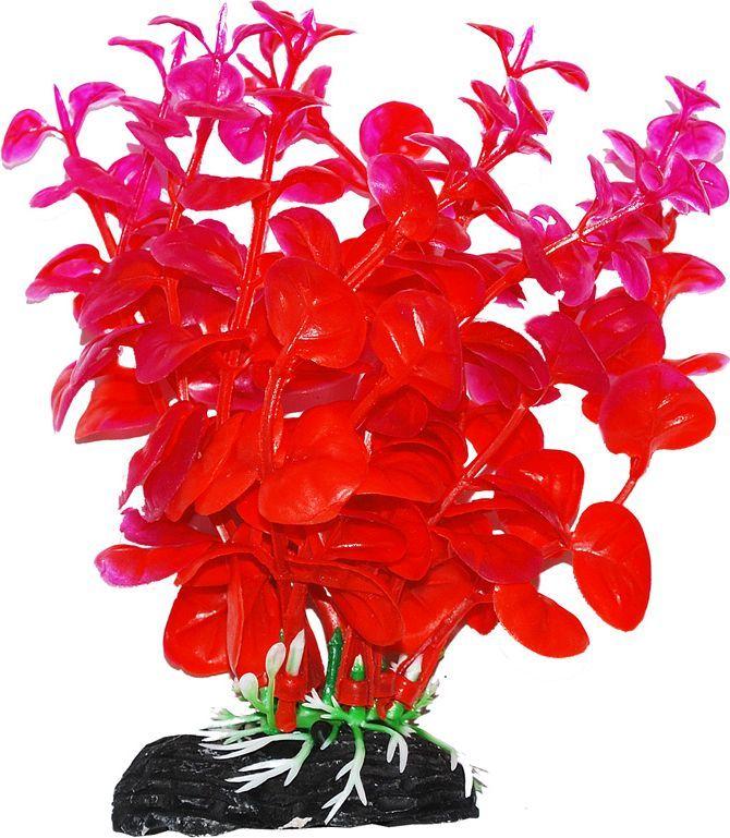Растение для аквариума Уют Бакопа оранжево-фиолетовая, высота 11 см wiegand 26 input