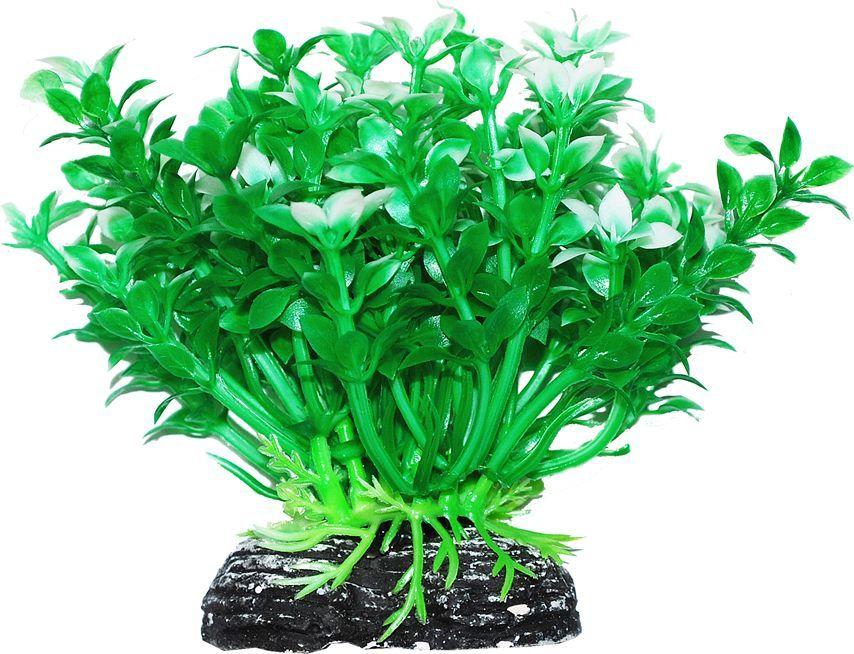 Растение для аквариума Уют Микрантемум зелено-белый, высота 11 см