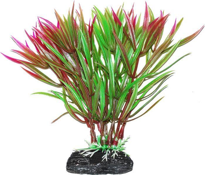 Растение для аквариума Уют Гетерантера зелено-фиолетовая, высота 11 см растение еда для рыб 5 букв
