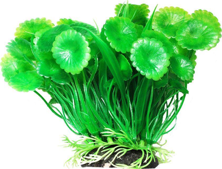 Растение для аквариума Уют Щитолистник с осотом, высота 12 см уют