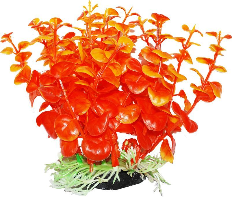 """Растение для аквариума Уют """"Бакопа оранжевая"""", высота 12 см"""