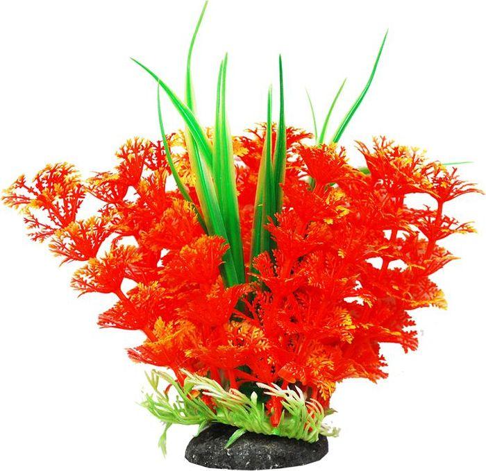 """Фото Растение для аквариума Уют """"Амбулия оранжевая с кружевными листьями"""", высота 12 см"""