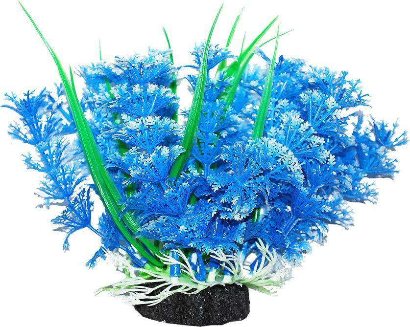 Растение для аквариума Уют Амбулия голубая с кружевными листьями, высота 12 см уют