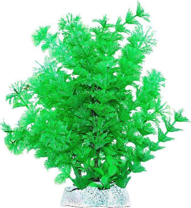 Растение для аквариума Уют Амбулия зеленая с кружевными листьями, высота 20 см уют