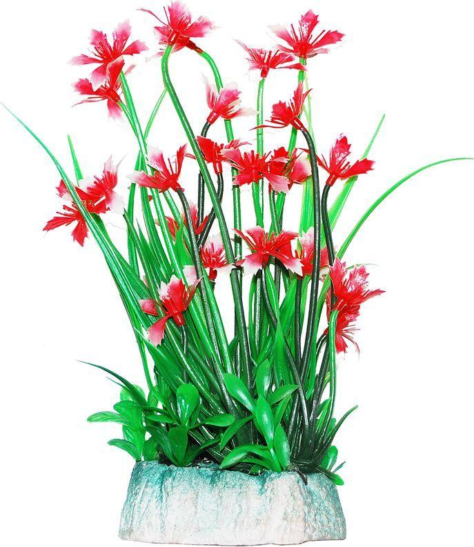 Растение для аквариума Уют Гемиантус с красными цветами, высота 24 см