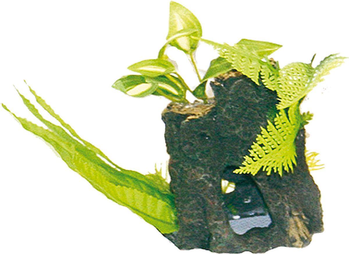 Растение для аквариума №1 Водоросли и зелень на коряге, высота 12 смЕР009Пластиковое растение для аквариума №1 - отличный аксессуар, который украсит ваш домашний аквариум. Изготовлено из искусственных и полимерных материалов. Безопасно для рыб и других аквариумных обитателей.