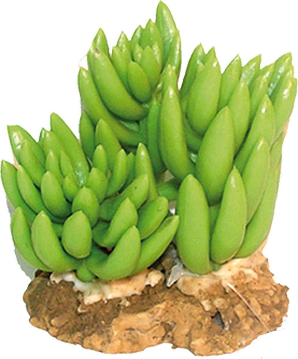 Растение для аквариума №1 Кактус - три цветка, высота 9 смЕР048Пластиковое растение для аквариума №1 - отличный аксессуар, который украсит ваш домашний аквариум. Изготовлено из искусственных и полимерных материалов. Безопасно для рыб и других аквариумных обитателей.