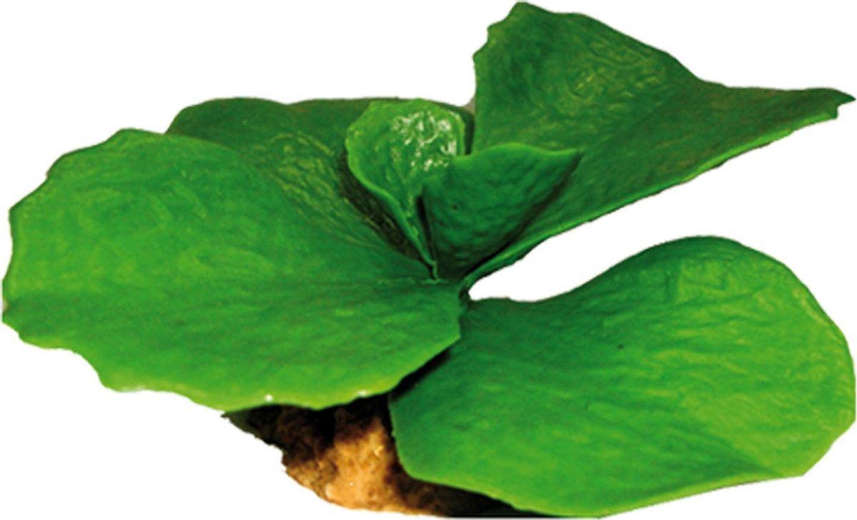 Растение для аквариума №1 Кактус с круглыми листьями, высота 7,3 см