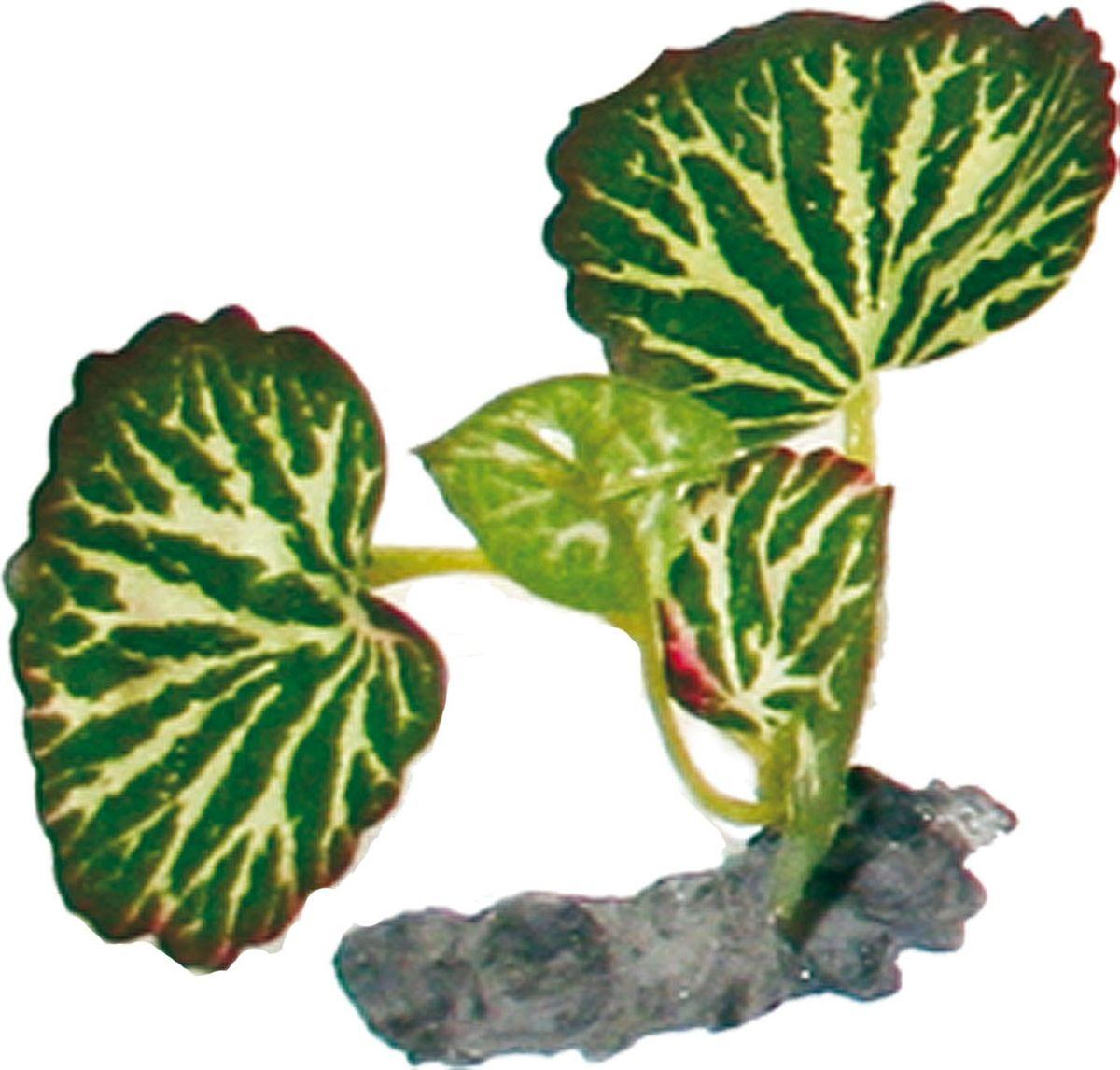 Растение для аквариума №1