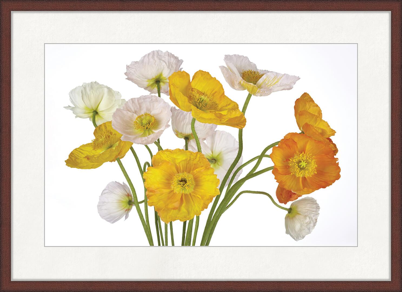 Картина Postermarket Исландские маки, 50 x 70 смED-11Маки - хоть и простые, но волшебные на вид цветы, будто красные огоньки, которые растут на полях. Цветок мак шелковистый на ощупь, имеет махровые лепестки, а расцветка растения бывает самой разной: белой, розовой, красной и даже черной. Стильное украшение современного интерьера.