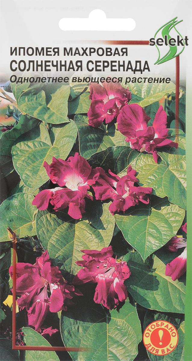 Семена Сортсемовощ Ипомея махровая. Солнечная Серенада4601819460083Растение многолетнее, выращиваемое как однолетнее, вьющееся, с разветвленными стеблями. Длина плети достигает 3м. Листьясердцевидные. Цветки- воронковидные, махровые, диаметром до 10 см. Это красивое растение используется для украшения перлог, беседок иоград.