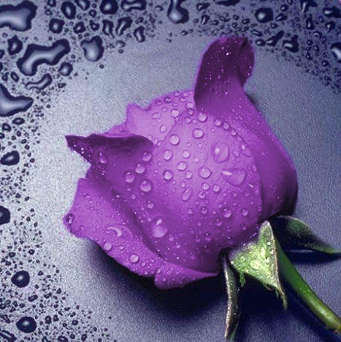 """Набор для изготовления картины со стразами Алмазная Живопись """"Сиреневая роза"""", 25 х 25 см"""
