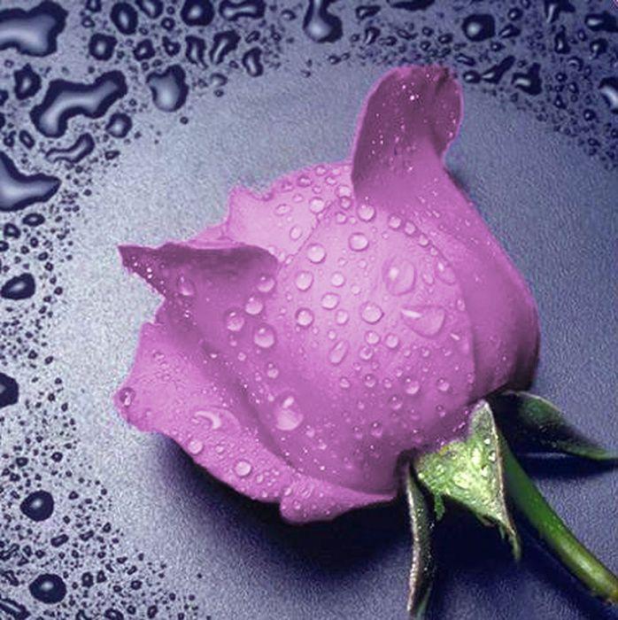 """Набор для изготовления картины со стразами Алмазная Живопись """"Розовая роза"""", 22 х 24 см"""