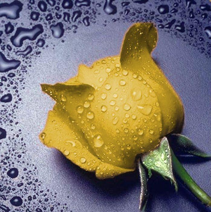 """Набор для изготовления картины со стразами Алмазная Живопись """"Желтая роза"""", 22 х 24 см"""