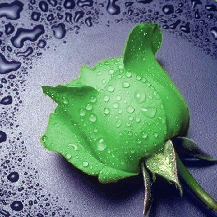 """Набор для изготовления картины со стразами Алмазная Живопись """"Зеленая роза"""", 22 х 24 см"""