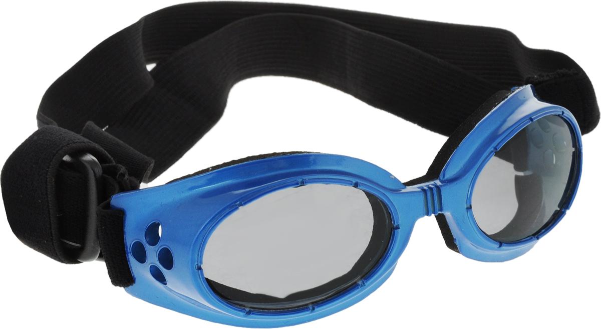 Очки для собак  Camon , затемненные, цвет: синий - Одежда, обувь, украшения
