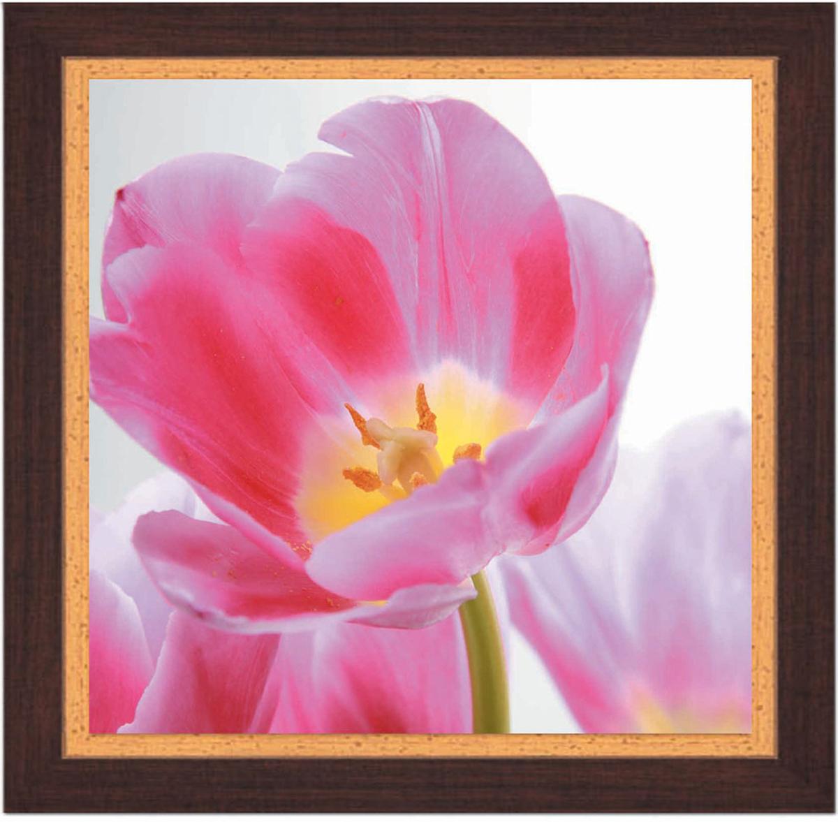 Постер в раме Postermarket Тюльпан, 30 см х 30 смPM-3005Картина для интерьера (постер) - современное и актуальное направление в дизайне любых помещений.Постер с красочным изображением розового тюльпана оформлен в раму коричневого цвета, выполненную из пластика под дерево. Картина защищена прозрачным пластиком. С задней стороны имеется петелька для подвешивания к стене. Картина может использоваться для оформления любых интерьеров: - дом, квартира (гостиная, спальня, кухня, прихожая, детская); - офис (комната переговоров, холл, кабинет); - бар, кафе, ресторан или гостиница.Картины, предоставляемые компанией Постермаркет:- собраны вручную из лучших импортных комплектующих; - надежно упакованы в пленку с противоударными уголками.