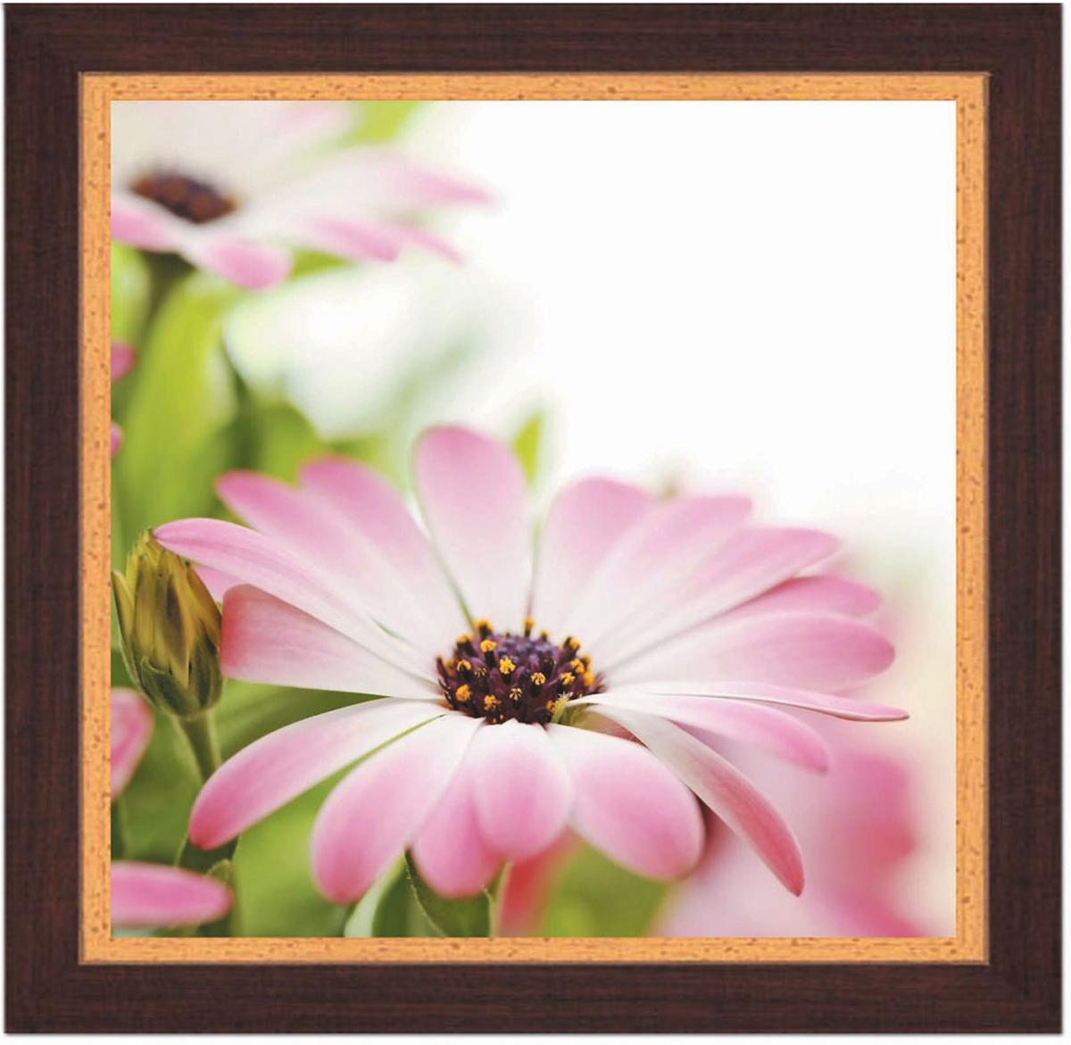 Постер в раме Postermarket Розовая хризантема, 30 х 30 смPM-3006Картина для интерьера (постер) - современное и актуальное направление в дизайне любых помещений.Постер с красочным изображением розовой хризантемы оформлен в раму коричневого цвета, выполненную из пластика под дерево. Картина защищена прозрачным пластиком. С задней стороны имеется петелька для подвешивания к стене.Картина может использоваться для оформления любых интерьеров: - дом, квартира (гостиная, спальня, кухня, прихожая, детская); - офис (комната переговоров, холл, кабинет); - бар, кафе, ресторан или гостиница. Картины, предоставляемые компанией Постермаркет:- собраны вручную из лучших импортных комплектующих; - надежно упакованы в пленку с противоударными уголками.