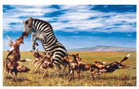 Картина-репродукция без рамки Зебра, 40 х 30 см 16431 картина postermarket бамбук 30 х 30 см