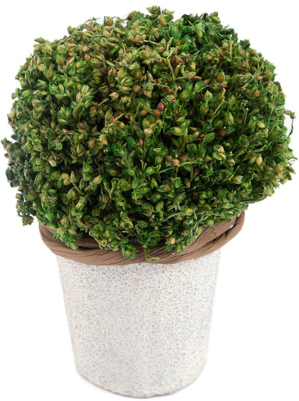 Композиция цветочная, диаметр 8 см, 10 см, цвет: зеленый79049Товары для украшения интерьера