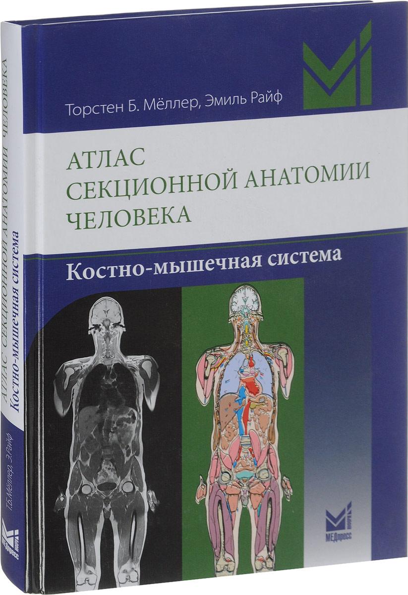 Лимфатическая система анатомия реферат 4311