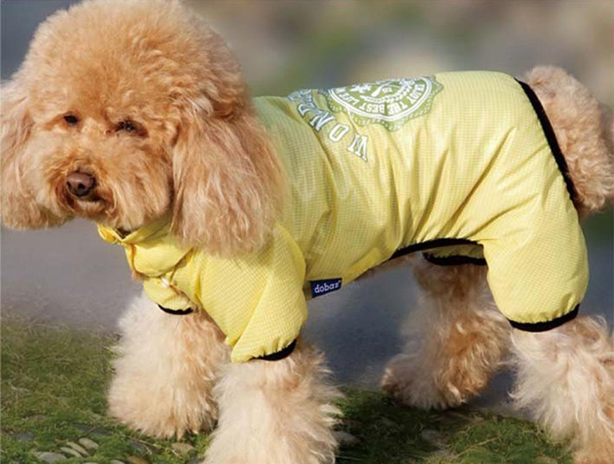 Комбинезон для собак Dobaz, цвет: желтый. ДА13009СХЛ. Размер XLДА13009СХЛКомбинезон Dobaz непродуваемый, имеет высокий воротник, который хорошо закрывает шею, дополнительно на шее регулируется кулиской. Изделие застегивается кнопками снизу.Легчайший невесомый комбинезон надежно защитит вашего любимца от пыли и грязи.Это особенно актуально после стрижки и для выставочных собак. Комбинезон весит всего 20 граммов.Его легко можно спрятать в карман и так же легко одеть на собаку при необходимости.Обхват шеи: 34 см.Обхват груди: 54 см.Длина спинки: 36 см.Одежда для собак: нужна ли она и как её выбрать. Статья OZON Гид