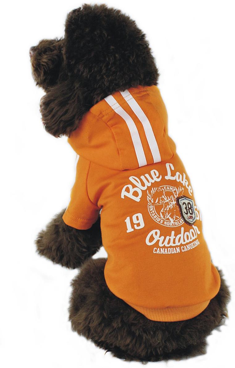 Майка-толстовка для собак Dobaz, утепленная, цвет: оранжевый. ДГ1103БХХЛ. Размер XXL комбинезон для собак dobaz цвет оранжевый черный да13049сл размер l