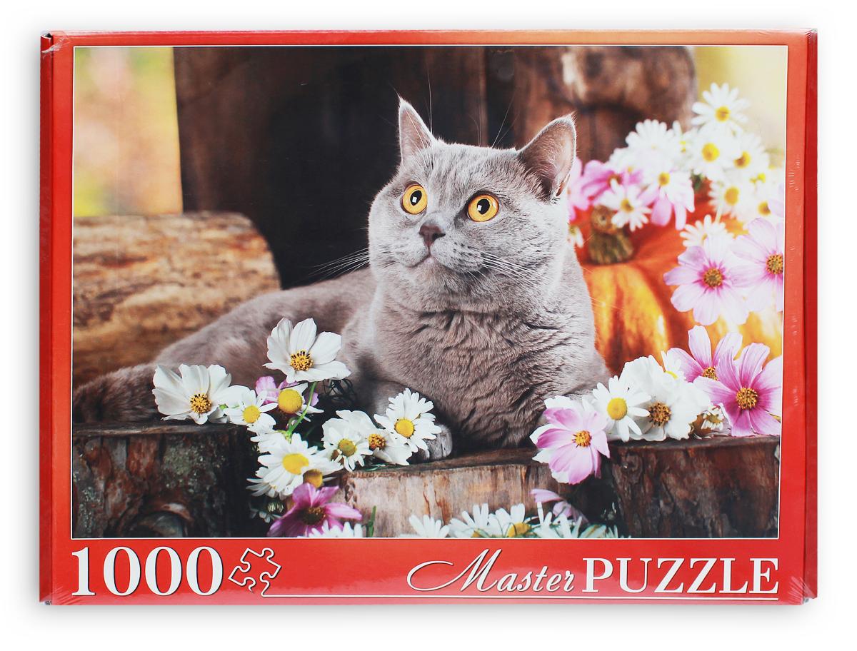 Masterpuzzle Пазл Красивый британский кот
