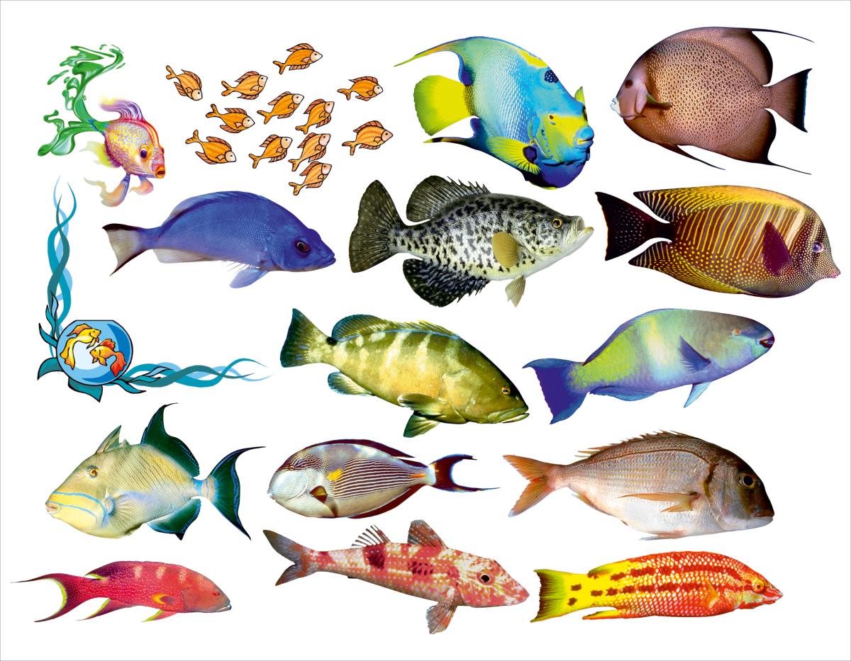 Наклейка декоративная Оранжевый Слоник Океанические рыбки, 45 х 35 см