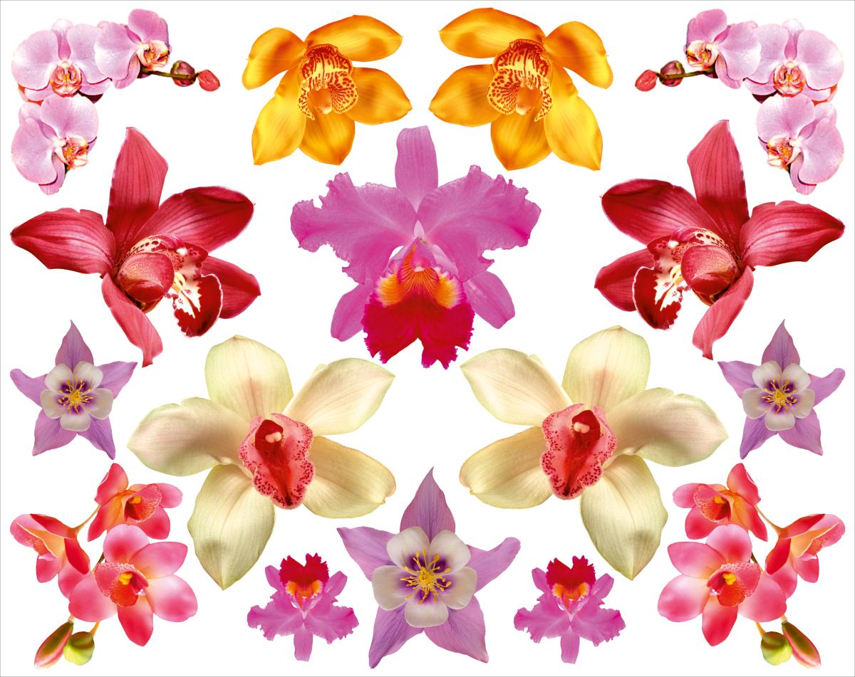 Наклейка декоративная Оранжевый Слоник Орхидеи, 45 х 35 см djeco бархатные раскраски птицы с 3 лет